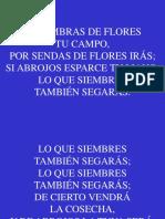 147;Si Siembras de Flores