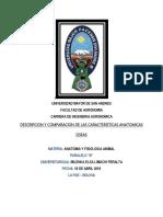 IDENTIFICACION DE HUESOS.docx