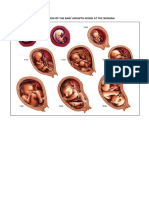 Reproduction of the Baby Growth Inside at the Woman - reproduccion del bebe dentro de la Mujer
