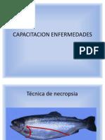 Capacitacion Enfermedades de Salmonideos (1)