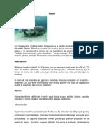 Animales Peligro (Autoguardado)