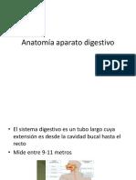 Anatomía aparato digestivo