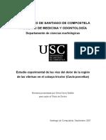 Estudio Experimental de Las Vías Del Dolor de La Región de Las Vibrisas
