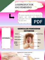 Anatomia y Fisiologia de Organos Reproductores-Tema 1