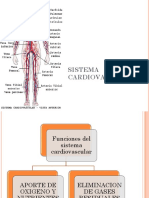2. Sistema Cardiovascular