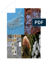 Amoebozoa_2015.pdf