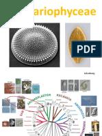 bacillariophyceae.pdf