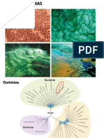 Cyanobacteria 2016