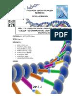 Informe Citogenetica Completo