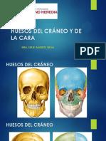 01huesos Cráneo y Cara