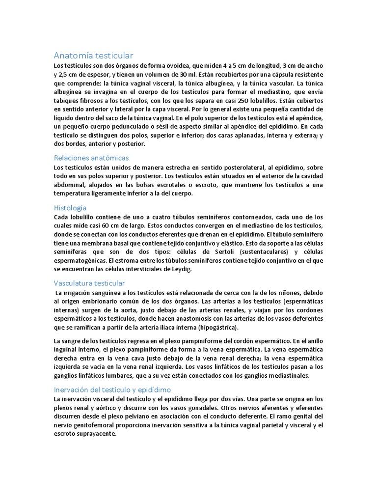Único Anatomía Y Fisiología Juegos Y Rompecabezas Respuestas ...