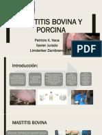 Mastitis Bovina Y PORCINA Expo