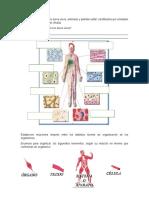 Guía de Reforzamiento Unidad II Cuerpo y Sistemas.doc