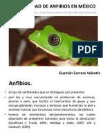 Diversidad de Anfibios en Mexico