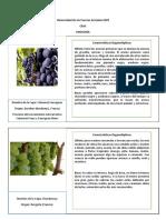 Fichas- Cabernet y Chardonnay