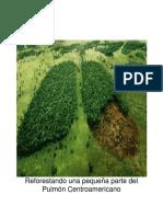 Reforestando Una Parte Del Pulmon Centroamericano