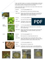 Alternativas de Alimentacion en Aves