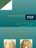 huesosdelcraneo-160517014559