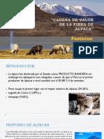 Crianza de Alpacas - Arequipa