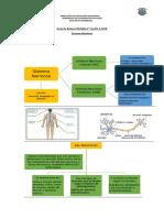 Guía de Repaso Sistema Nervioso 2°A