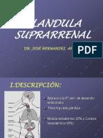 G. Suprarrenal[1]
