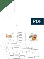 Mapas de Los Sentidos