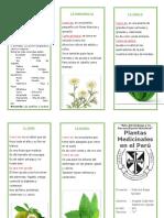 228385367 Triptico Plantas Medicinales