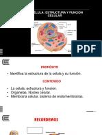 1. Semana 06_estructura y Funcion Celular