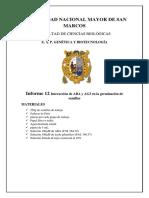 Informe N 12