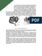 La glándula mamaria de la cabra.docx