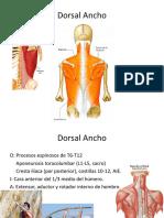 4- Miología General