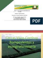 Diapositivas Piña.
