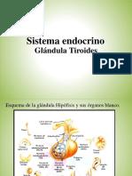 1. Copia de Sistema Endocrinollll 1