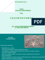 Echinoderm at A