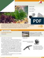 008-lechuga-de-mar.pdf