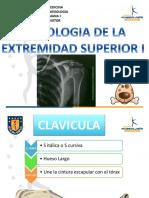 Osteologia - Cintura Escapular