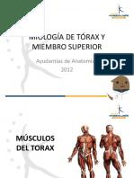 Miología de MMSS