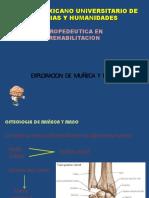Anatomia de Mano y Muñeca