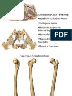 Articulacion delacadera conradiologia y perthes