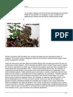 Revegetar Cannabis (por Javier Marín)