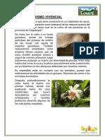 TURISMO VIVENCIAL.docx