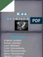 Koala Bear Powerpoint