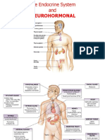 Dr Tomy_Anatomi Organ Endokrin