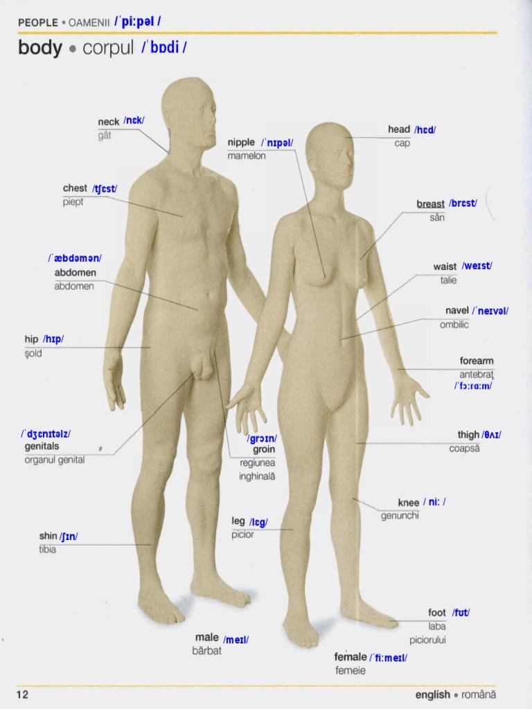 corpul subțire original