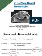 Neurulação - Prof. Juliana Coelho