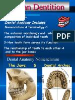 Dental Anatomy Intro (1)