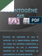odontognesisregis-111102230615-phpapp01 (1).pdf