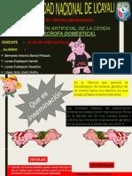 Ensimiinacion Del Cerdo
