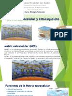 Capitulo Matriz Extracel-citoesqueleto