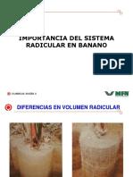 15 M Pozo Importancia Del Sistema Radicular en El Bananno (1)